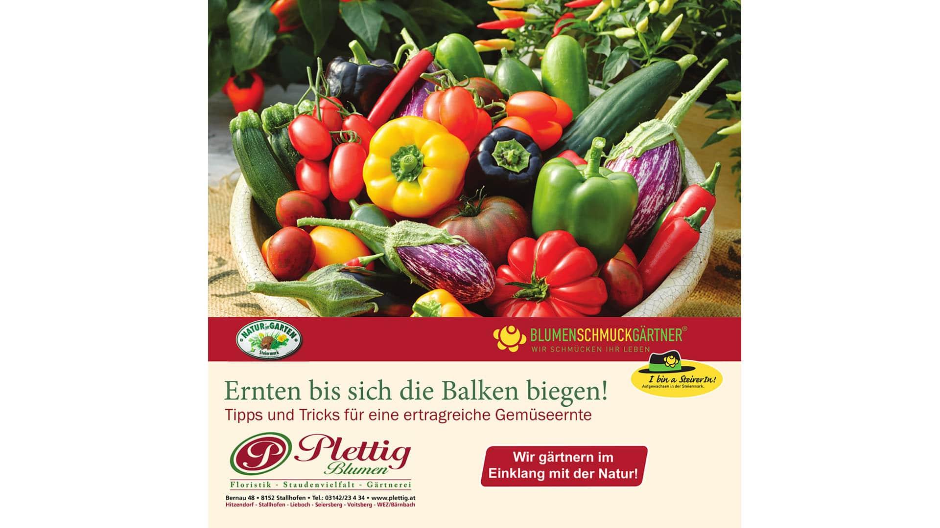 Plettig-Gemüsefolder-2021